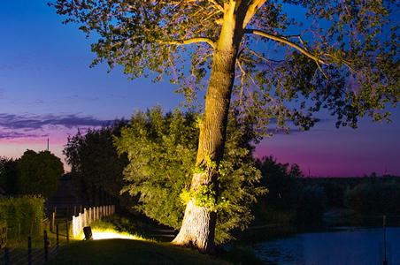 Baum beleuchtet von einem LED-Fluter